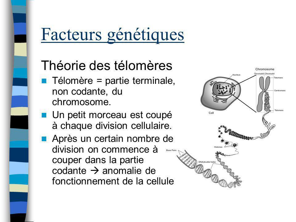 Facteurs génétiques Théorie des télomères Télomère = partie terminale, non codante, du chromosome. Un petit morceau est coupé à chaque division cellul