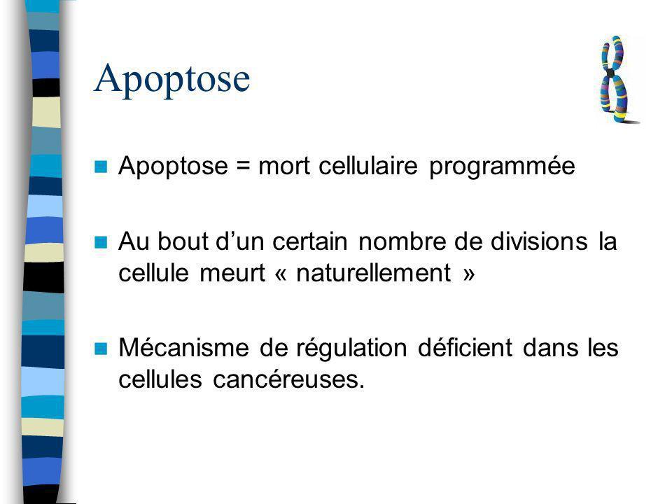 Apoptose Apoptose = mort cellulaire programmée Au bout dun certain nombre de divisions la cellule meurt « naturellement » Mécanisme de régulation défi