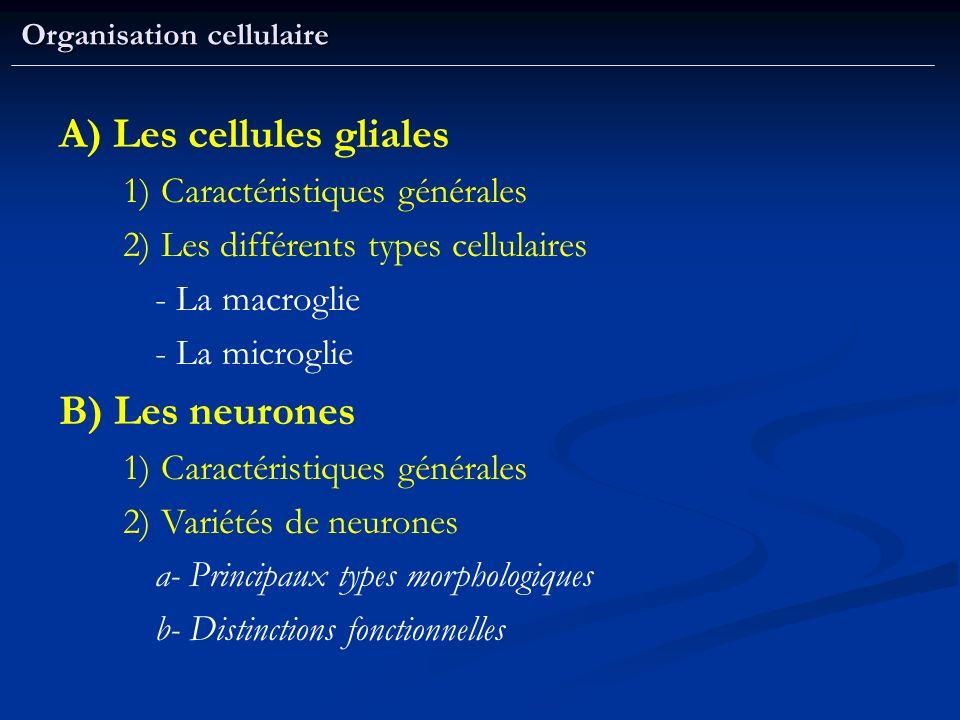 Organisation cellulaire A) Les cellules gliales 1) Caractéristiques générales 2) Les différents types cellulaires - La macroglie - La microglie B) Les