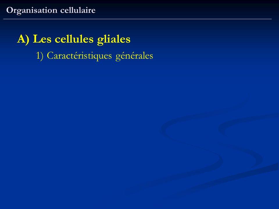 Organisation cellulaire A) Les cellules gliales 1) Caractéristiques générales