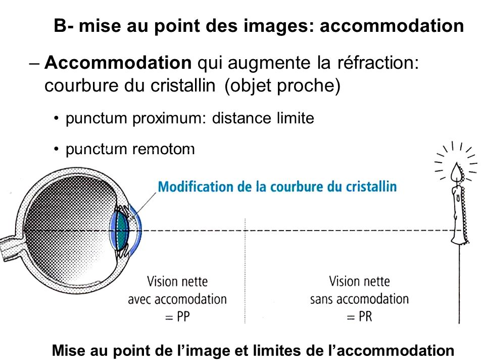 B- mise au point des images: accommodation –Accommodation qui augmente la réfraction: courbure du cristallin (objet proche) punctum proximum: distance