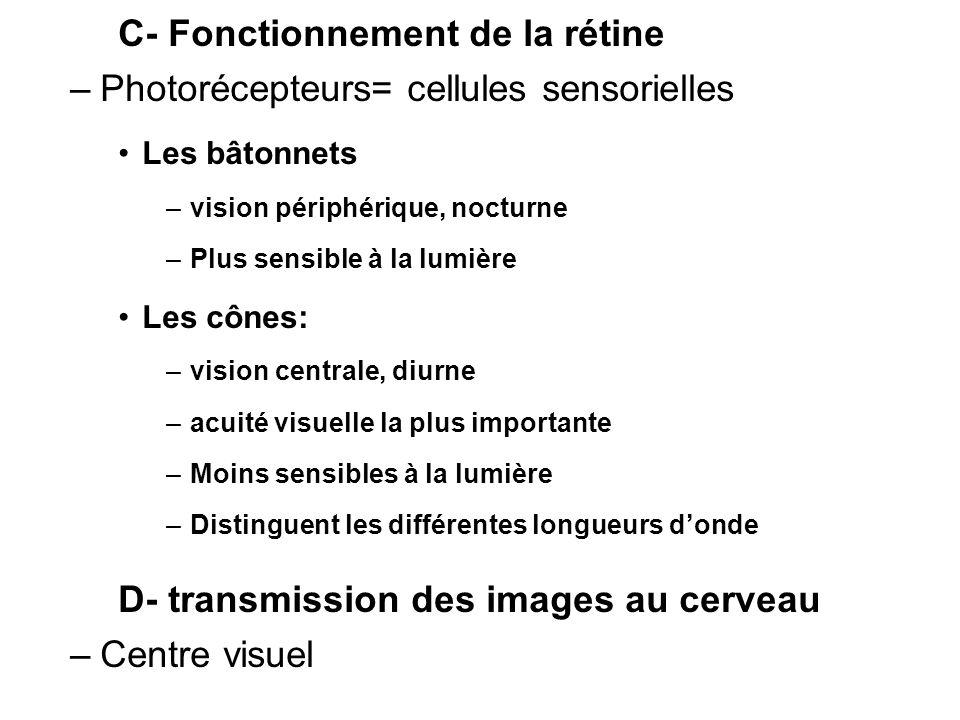 C- Fonctionnement de la rétine –Photorécepteurs= cellules sensorielles Les bâtonnets –vision périphérique, nocturne –Plus sensible à la lumière Les cô