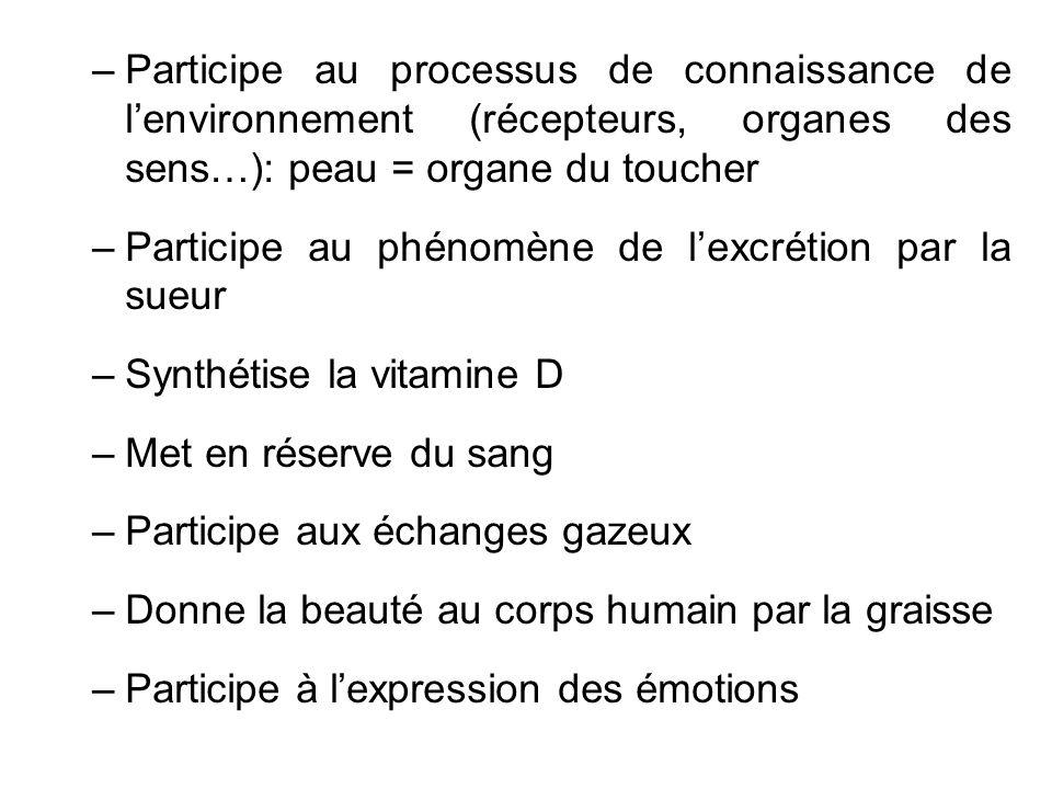 –Participe au processus de connaissance de lenvironnement (récepteurs, organes des sens…): peau = organe du toucher –Participe au phénomène de lexcrét