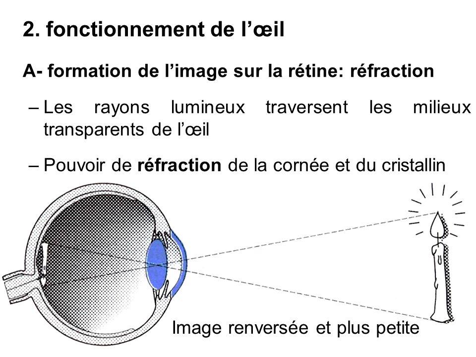 2. fonctionnement de lœil A- formation de limage sur la rétine: réfraction –Les rayons lumineux traversent les milieux transparents de lœil –Pouvoir d