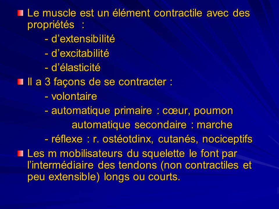 Le muscle est un élément contractile avec des propriétés : - dextensibilité - dexcitabilité - délasticité Il a 3 façons de se contracter : - volontair