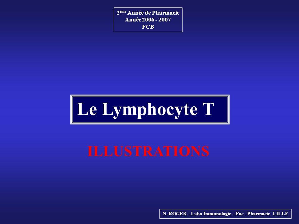 2 ème Année de Pharmacie Année 2006 - 2007 FCB Le Lymphocyte T N. ROGER - Labo Immunologie - Fac. Pharmacie LILLE ILLUSTRATIONS