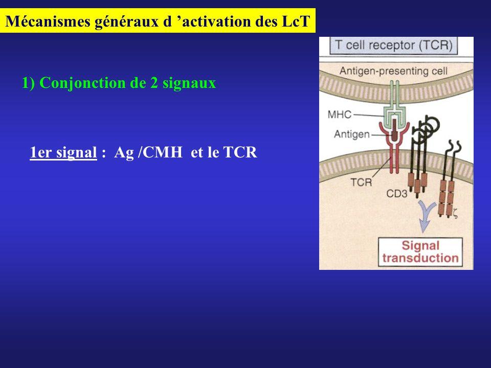 Mécanismes généraux d activation des LcT 1) Conjonction de 2 signaux 1er signal : Ag /CMH et le TCR