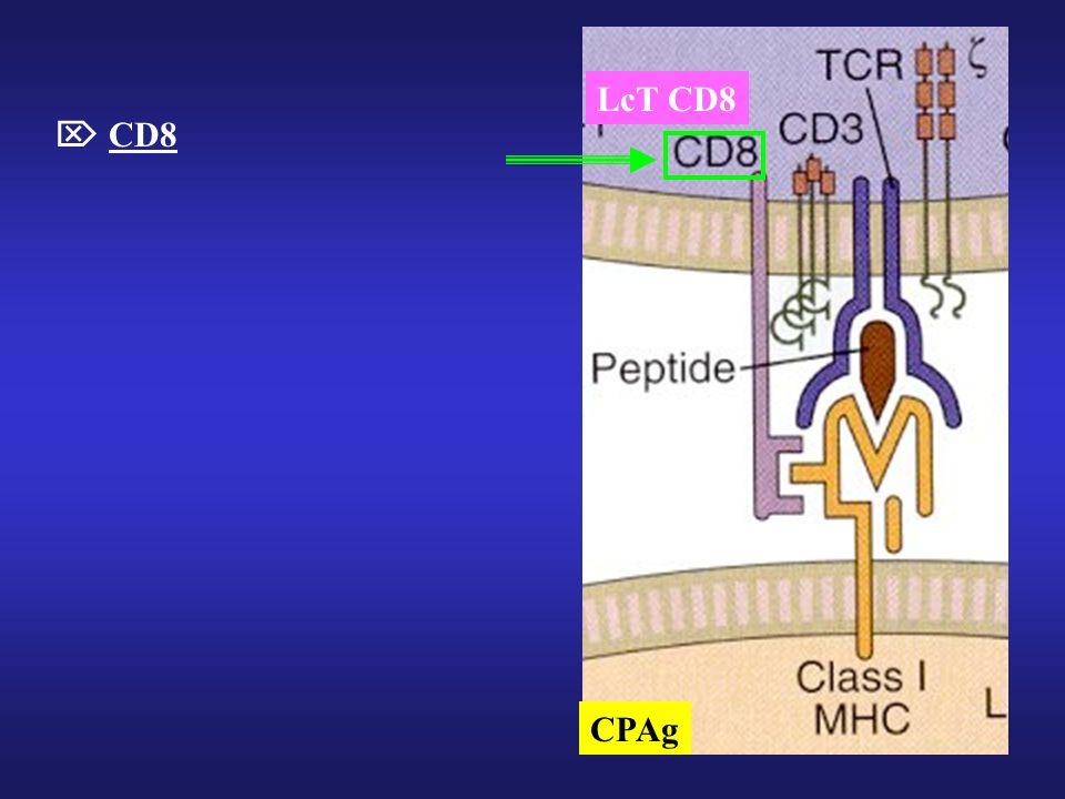 CD8 CPAg LcT CD8