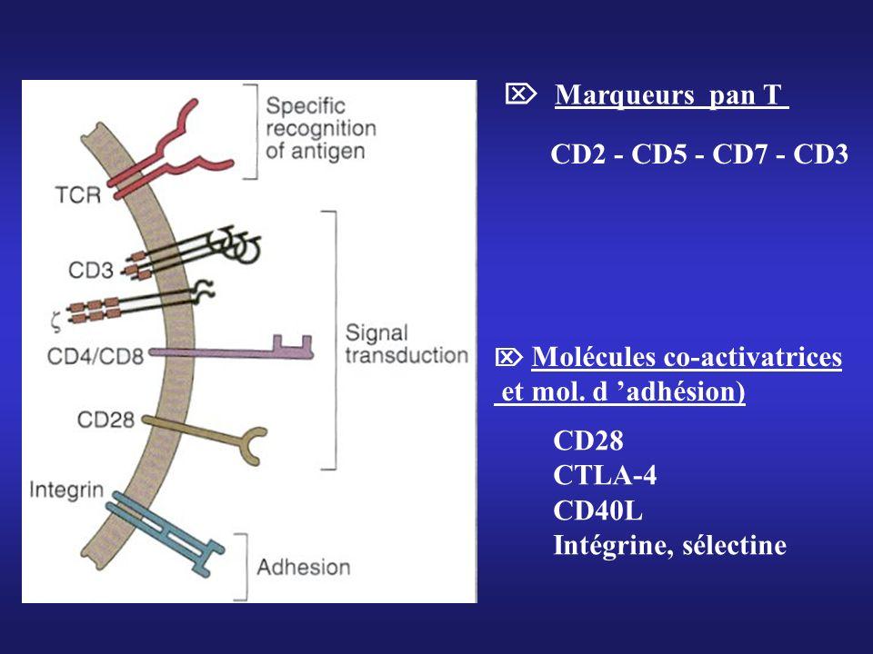 Molécules co-activatrices et mol. d adhésion) CD28 CTLA-4 CD40L Intégrine, sélectine Marqueurs pan T CD2 - CD5 - CD7 - CD3