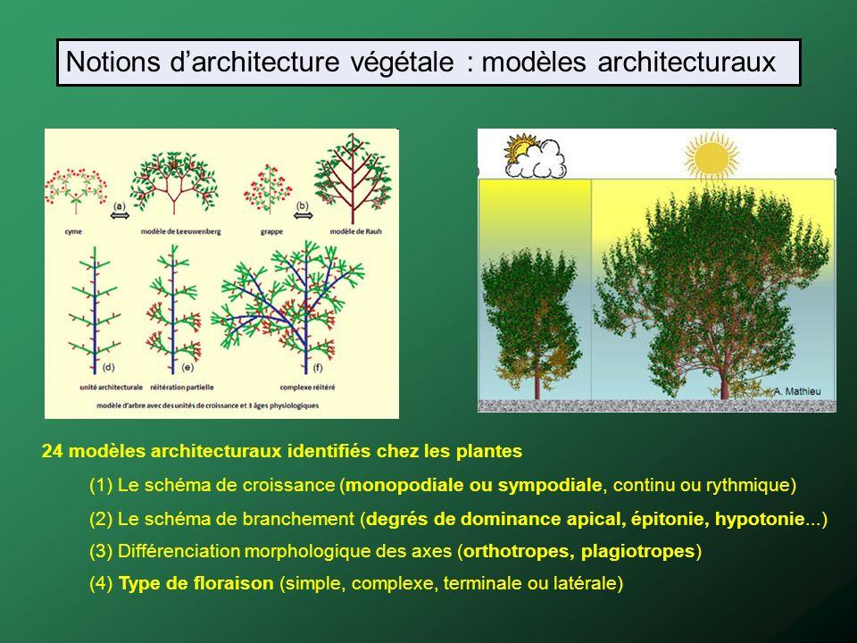 24 modèles architecturaux identifiés chez les plantes (1) Le schéma de croissance (monopodiale ou sympodiale, continu ou rythmique) (2) Le schéma de b