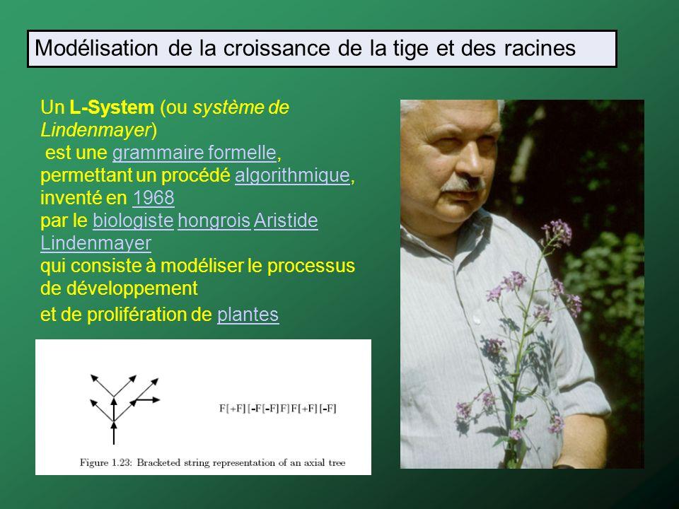 Un L-System (ou système de Lindenmayer) est une grammaire formelle, permettant un procédé algorithmique, inventé en 1968 par le biologiste hongrois Ar