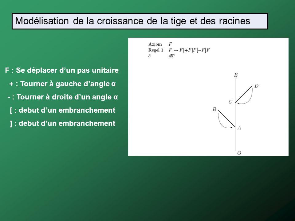 F : Se déplacer dun pas unitaire + : Tourner à gauche dangle α - : Tourner à droite dun angle α [ : debut dun embranchement ] : debut dun embranchemen