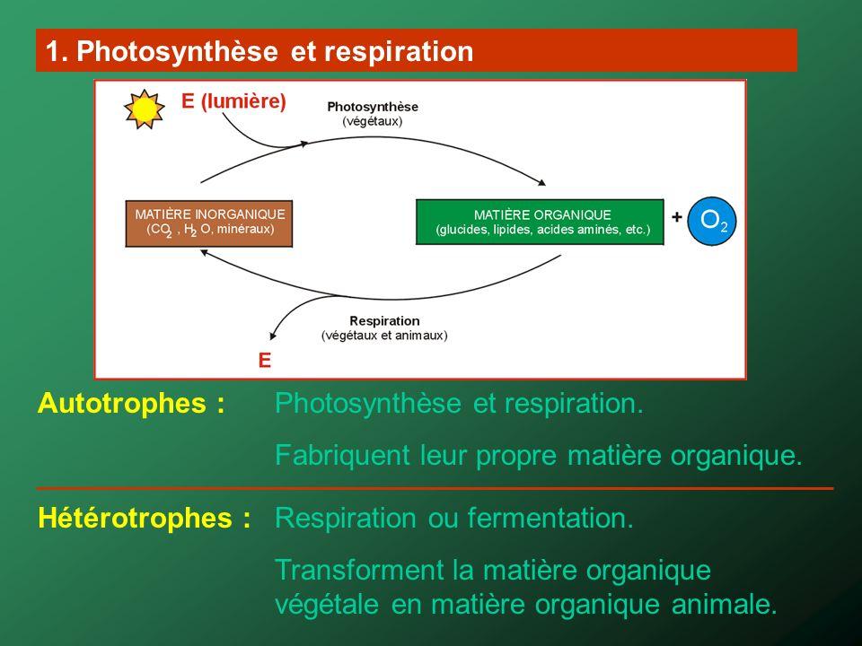 2. Les chloroplastes Responsables de la photosynthèse dans les parties vertes des plantes.