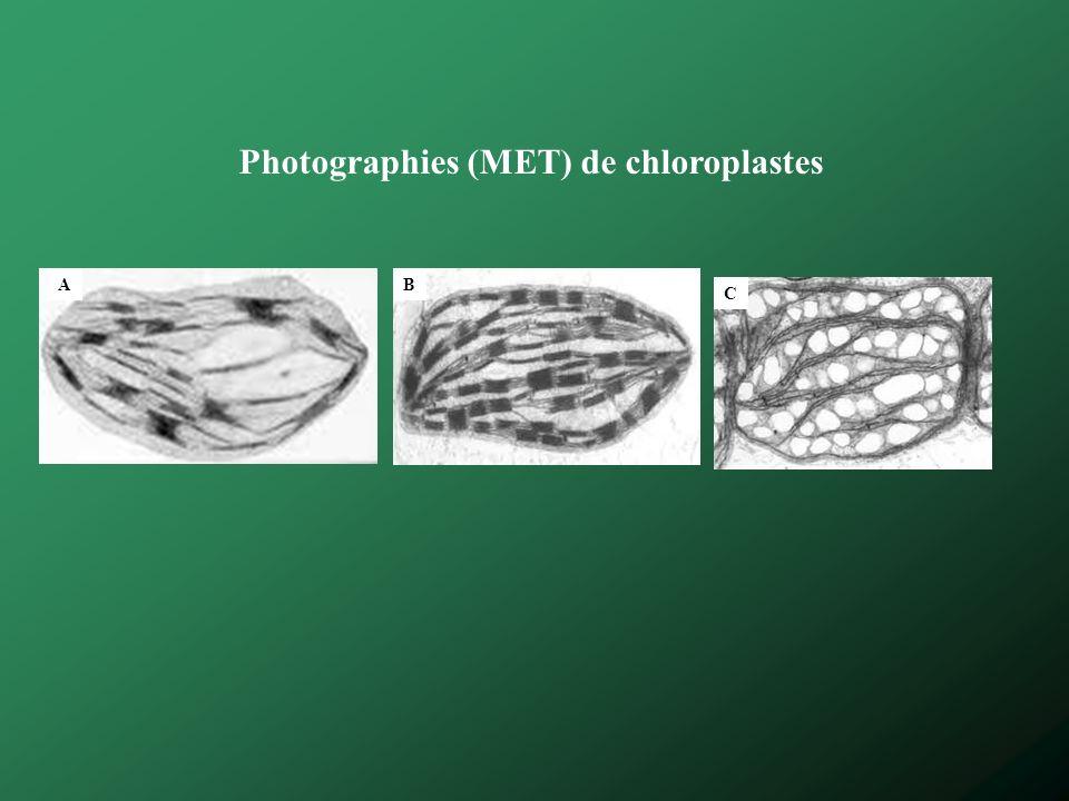 Photographies (MET) de chloroplastes AB C