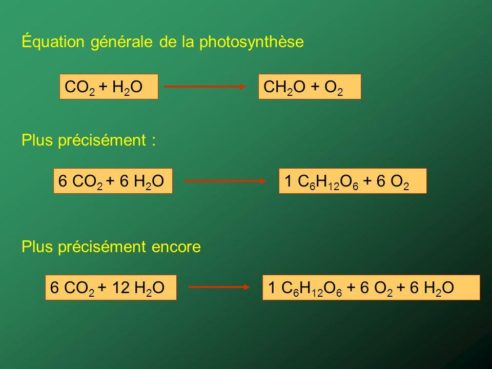 O 2 Provient de l eau 6 CO 2 16 + 6 H 2 O 18 Glucose 16 + 6 O 2 18 Un arbre moyen absorbe chaque année environ 12 Kg de CO 2, une quantité équivalente à celle émise par une voiture roulant sur une distance de 7,000 Km.