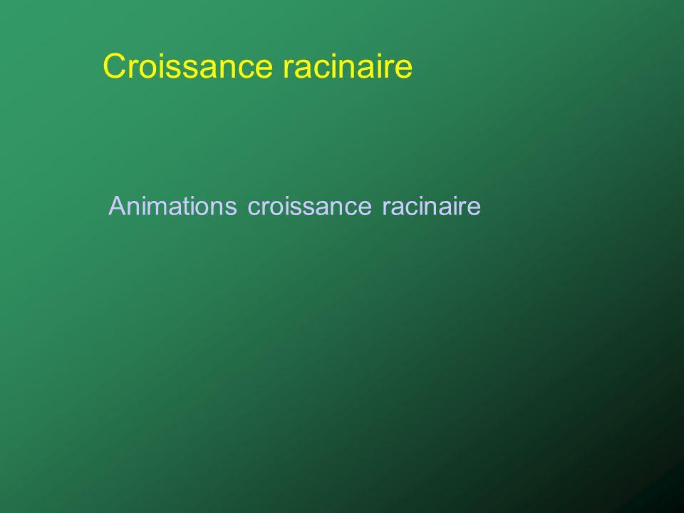 Croissance racinaire Animations croissance racinaire
