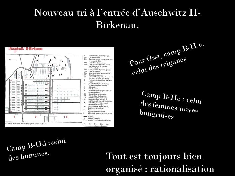 Nouveau tri à lentrée dAuschwitz II- Birkenau. Pour Ossi, camp B-II e, celui des tziganes Camp B-IId :celui des hommes. Camp B-IIc : celui des femmes