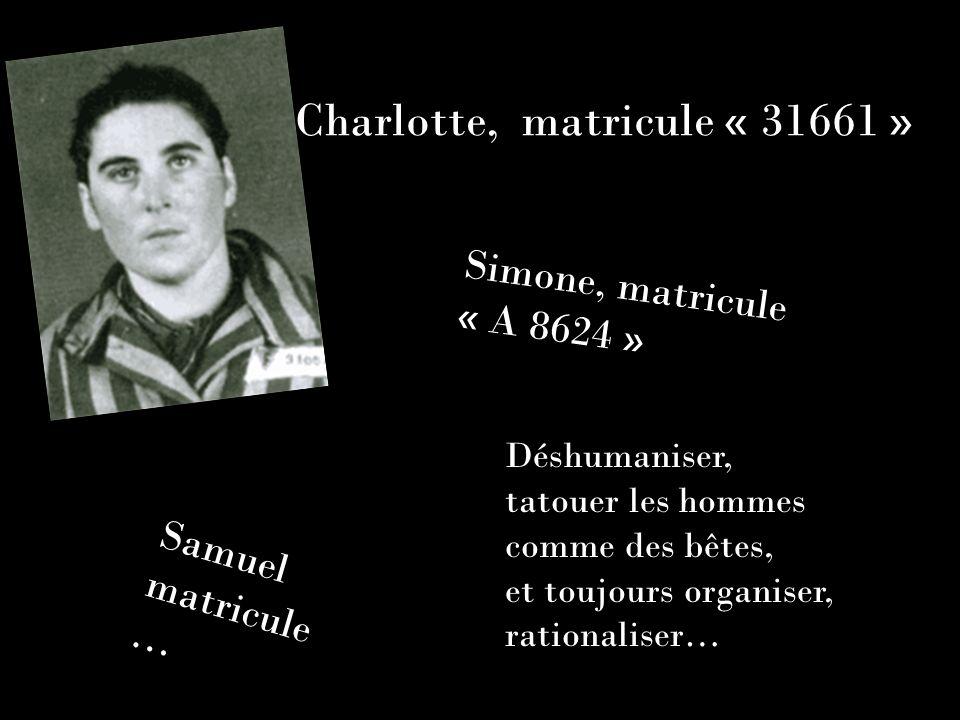 Charlotte, matricule « 31661 » Simone, matricule « A 8624 » Samuel matricule … Déshumaniser, tatouer les hommes comme des bêtes, et toujours organiser