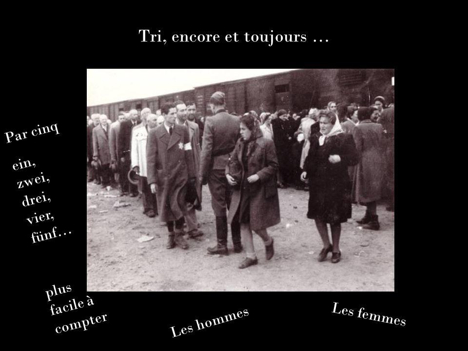 Tri, encore et toujours … Les hommes Les femmes Par cinq ein, zwei, drei, vier, fünf… plus facile à compter