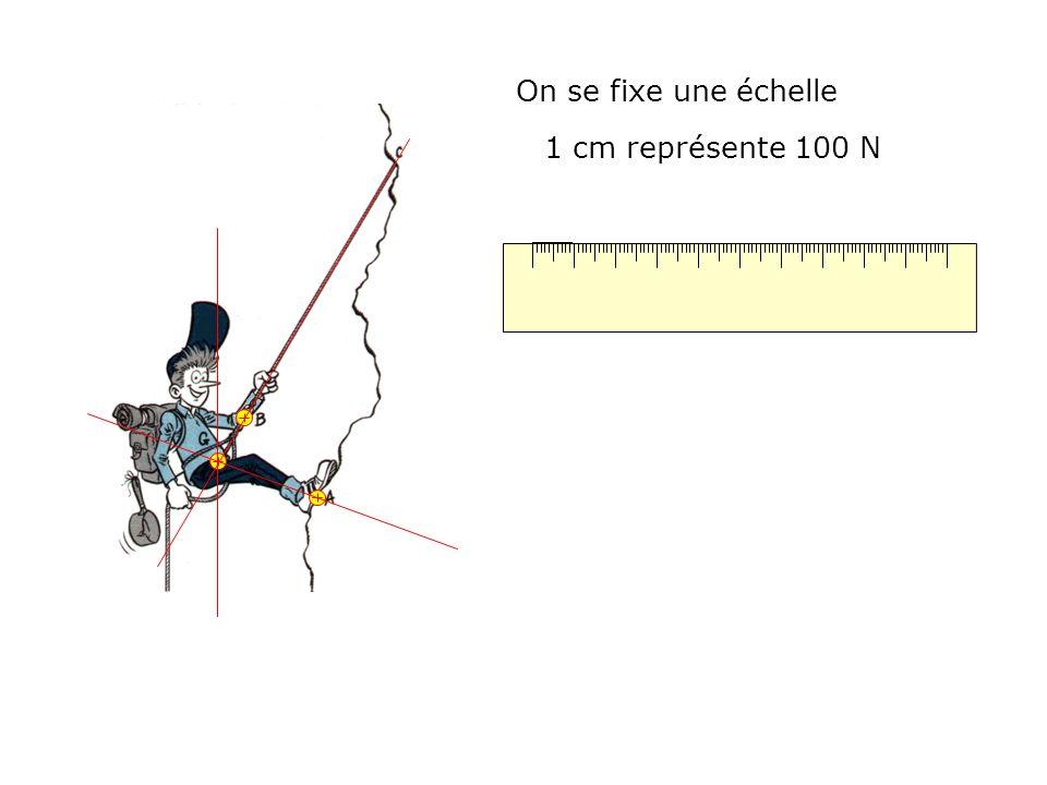 On se fixe une échelle 1 cm représente 100 N