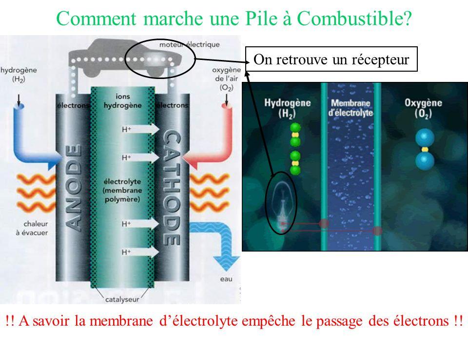 Comment marche une Pile à Combustible? On retrouve un récepteur !! A savoir la membrane délectrolyte empêche le passage des électrons !!