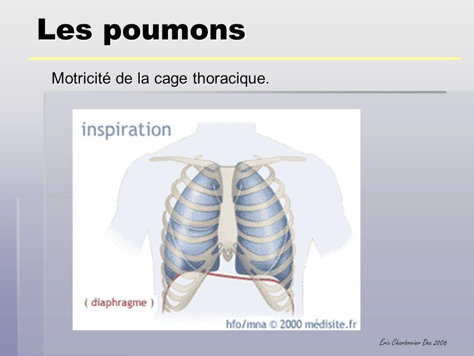 Eric Charbonnier Dec 2006 Les poumons Motricité de la cage thoracique.