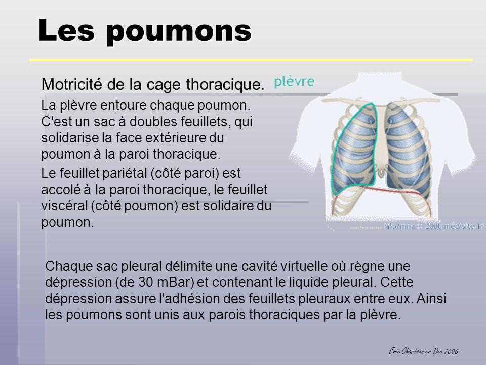 Eric Charbonnier Dec 2006 Motricité de la cage thoracique. La plèvre entoure chaque poumon. C'est un sac à doubles feuillets, qui solidarise la face e
