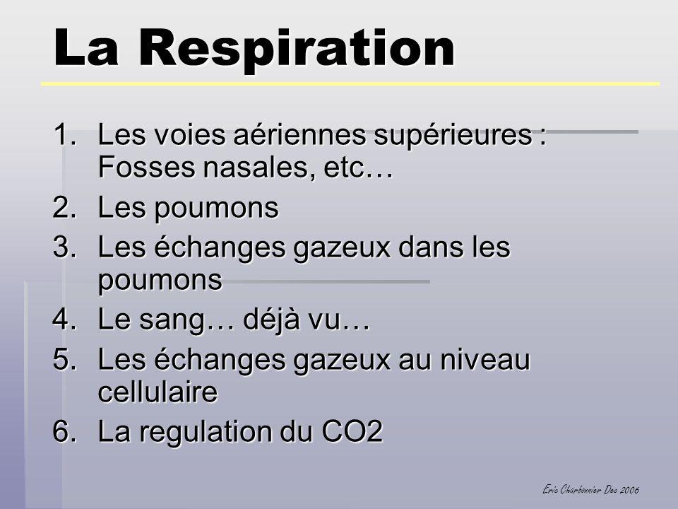 Eric Charbonnier Dec 2006 La Respiration 1.Les voies aériennes supérieures : Fosses nasales, etc… 2.Les poumons 3.Les échanges gazeux dans les poumons
