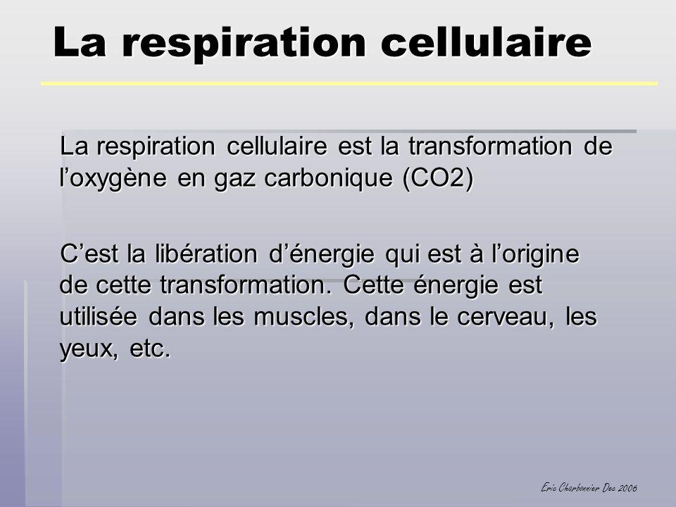 Eric Charbonnier Dec 2006 La respiration cellulaire La respiration cellulaire est la transformation de loxygène en gaz carbonique (CO2) Cest la libéra