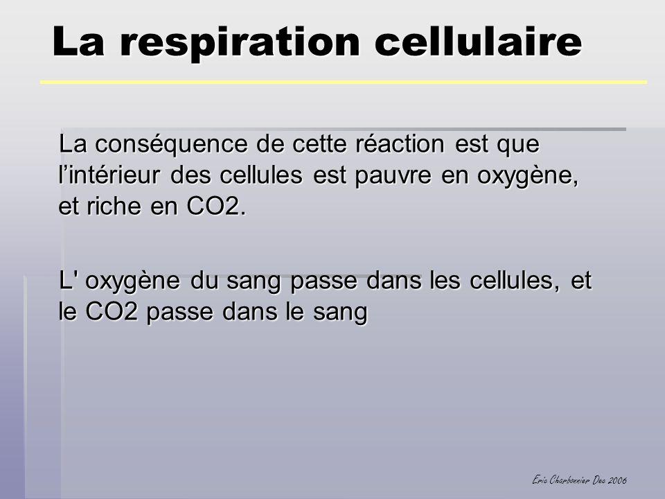 Eric Charbonnier Dec 2006 La respiration cellulaire La conséquence de cette réaction est que lintérieur des cellules est pauvre en oxygène, et riche e