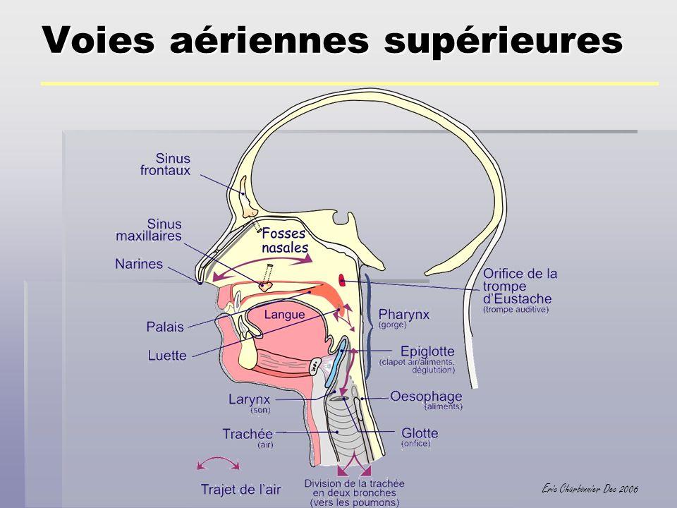Eric Charbonnier Dec 2006 Voies aériennes supérieures Barotraumatismes SP Oreille