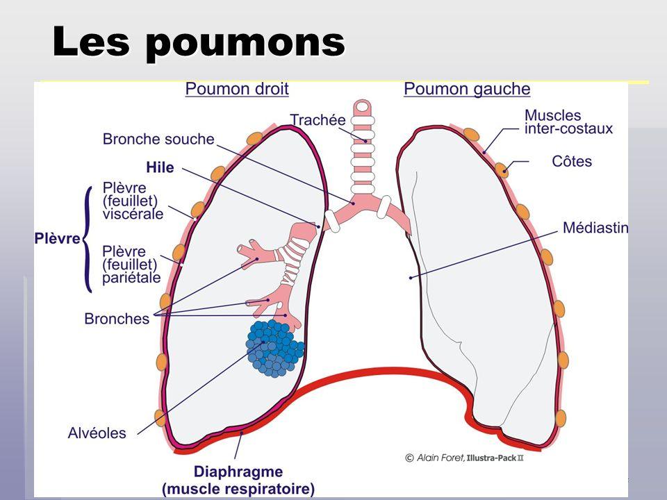 Eric Charbonnier Dec 2006 Régulation du CO2 Le CO2 en excès est toxique pour lorganisme.