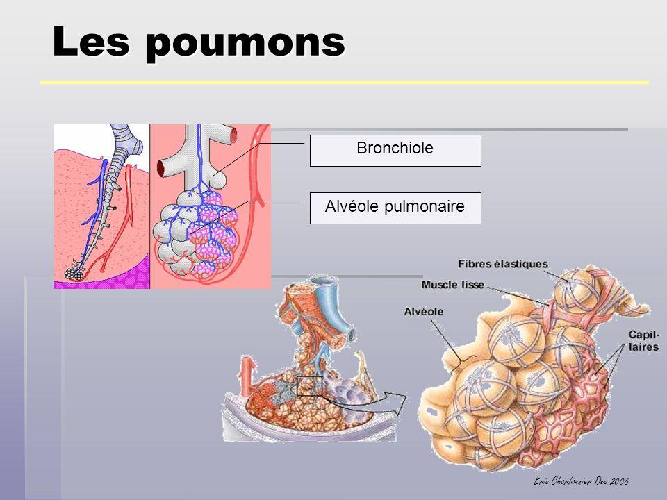 Eric Charbonnier Dec 2006 Les échanges gazeux Dans les alvéoles pulmonaires, lair est riche en oxygène, Dans les capillaires pulmonaires, le sang est pauvre en oxygène.