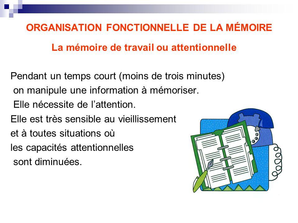 ORGANISATION FONCTIONNELLE DE LA MÉMOIRE La mémoire de travail ou attentionnelle Pendant un temps court (moins de trois minutes) on manipule une infor