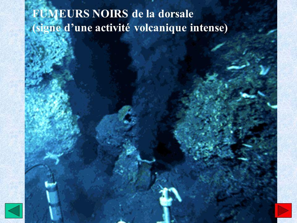 FUMEURS NOIRS de la dorsale (signe dune activité volcanique intense)