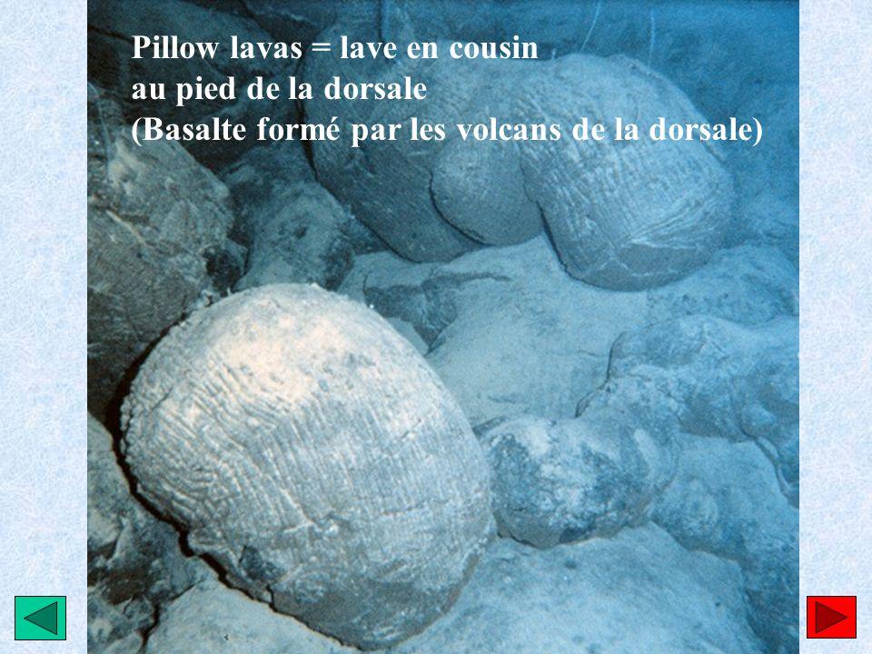 Pillow lavas = lave en cousin au pied de la dorsale (Basalte formé par les volcans de la dorsale)