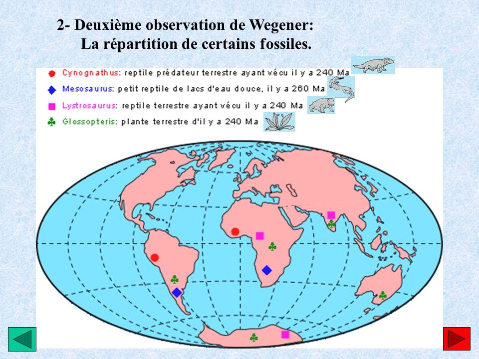 2- Deuxième observation de Wegener: La répartition de certains fossiles.