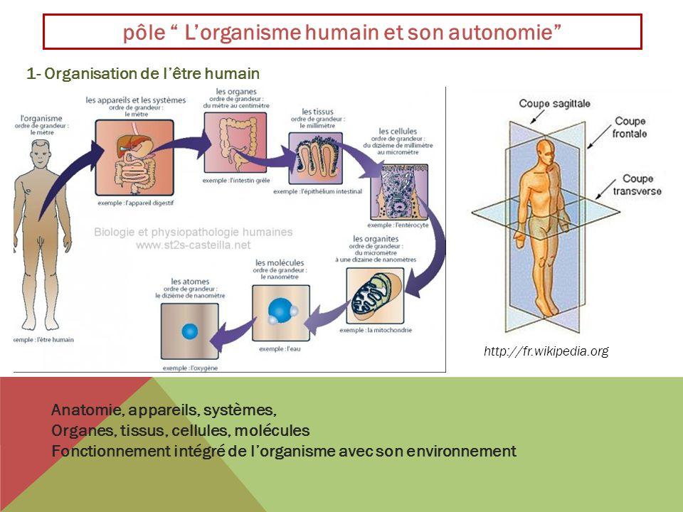 pôle Lorganisme humain et son autonomie 1- Organisation de lêtre humain Anatomie, appareils, systèmes, Organes, tissus, cellules, molécules Fonctionne