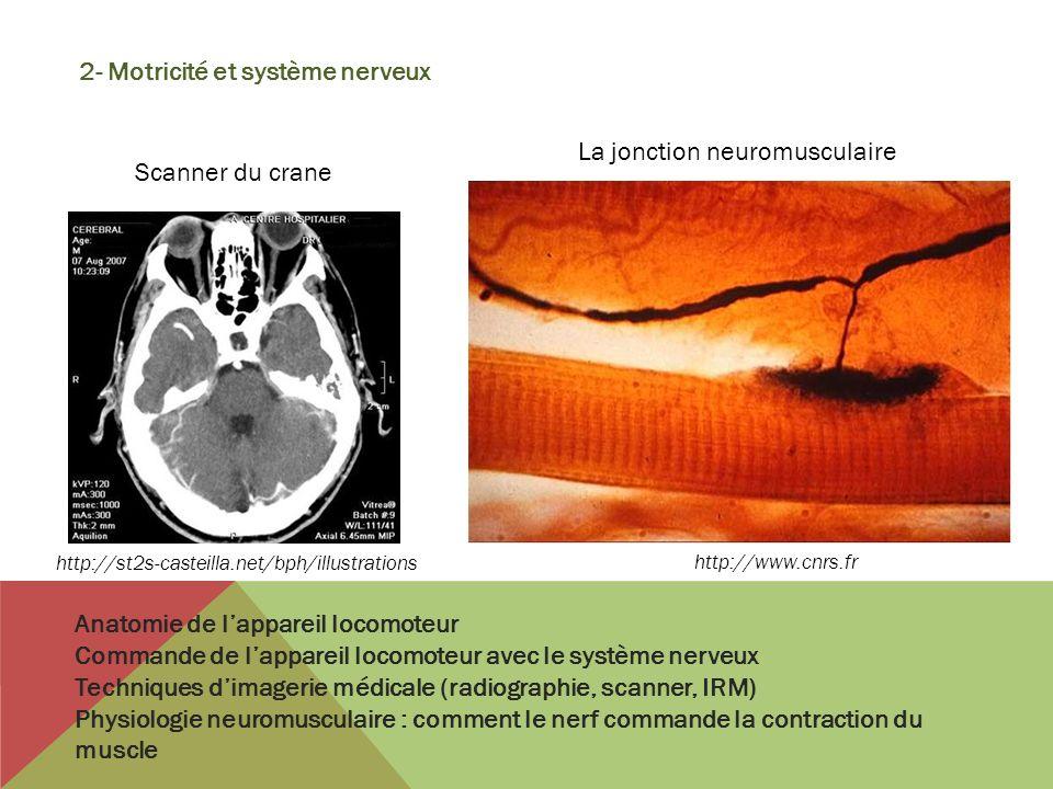2- Motricité et système nerveux Anatomie de lappareil locomoteur Commande de lappareil locomoteur avec le système nerveux Techniques dimagerie médical