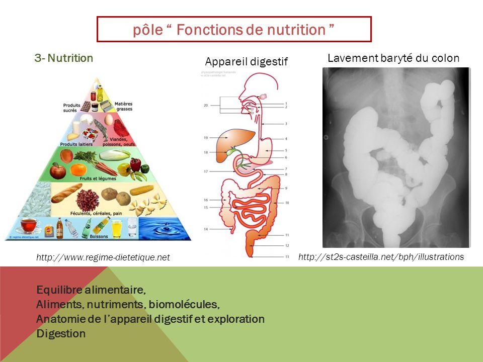 pôle Fonctions de nutrition Equilibre alimentaire, Aliments, nutriments, biomolécules, Anatomie de lappareil digestif et exploration Digestion http://