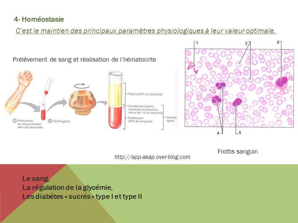 4- Homéostasie Cest le maintien des principaux paramètres physiologiques à leur valeur optimale. Le sang, La régulation de la glycémie, Les diabètes «