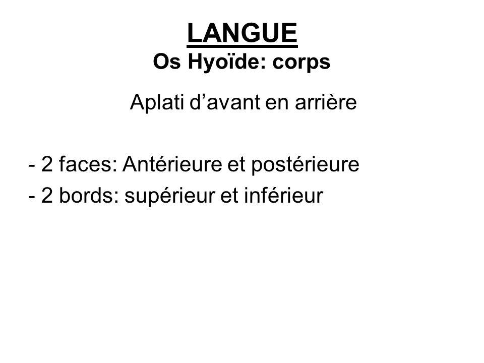 LANGUE Os Hyoïde: corps Aplati davant en arrière - 2 faces: Antérieure et postérieure - 2 bords: supérieur et inférieur