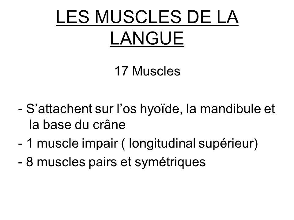 LES MUSCLES DE LA LANGUE 17 Muscles - Sattachent sur los hyoïde, la mandibule et la base du crâne - 1 muscle impair ( longitudinal supérieur) - 8 musc