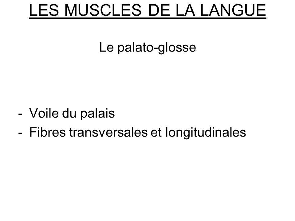 LES MUSCLES DE LA LANGUE Le palato-glosse -Voile du palais -Fibres transversales et longitudinales