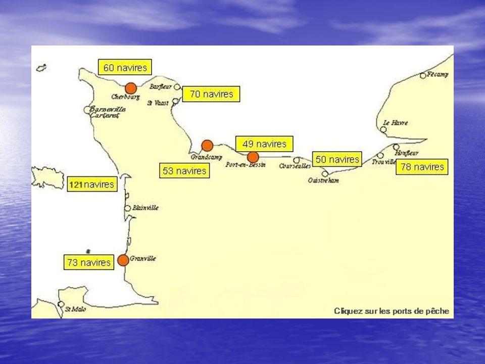 CONCHYLICULTURE OSTREICULTURE 56000 T dont 48% sur la côte ouest, 31% St Vaast, 18% Baie des Veys, 3% Meuvaines OSTREICULTURE 56000 T dont 48% sur la côte ouest, 31% St Vaast, 18% Baie des Veys, 3% Meuvaines MYTILICULTURE 24000 T dont 93% sur la Côte Ouest MYTILICULTURE 24000 T dont 93% sur la Côte Ouest