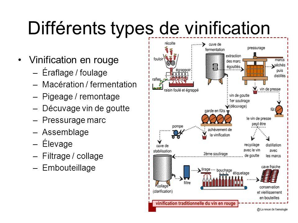 Différents types de vinification Vinification en rouge –Éraflage / foulage –Macération / fermentation –Pigeage / remontage –Décuvage vin de goutte –Pr