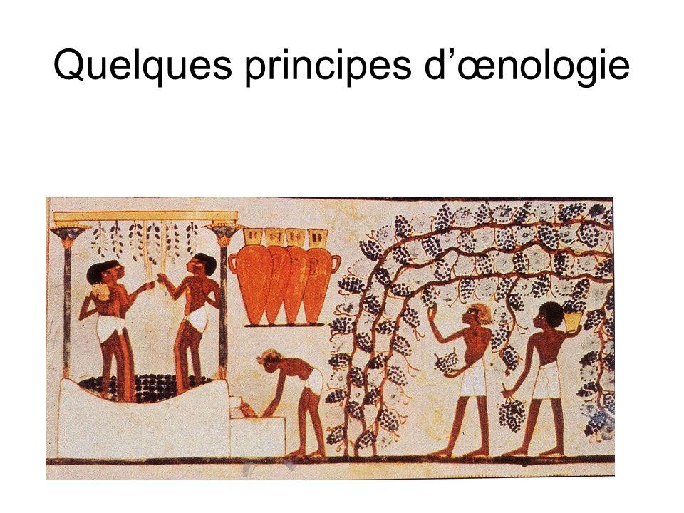 Quelques principes dœnologie