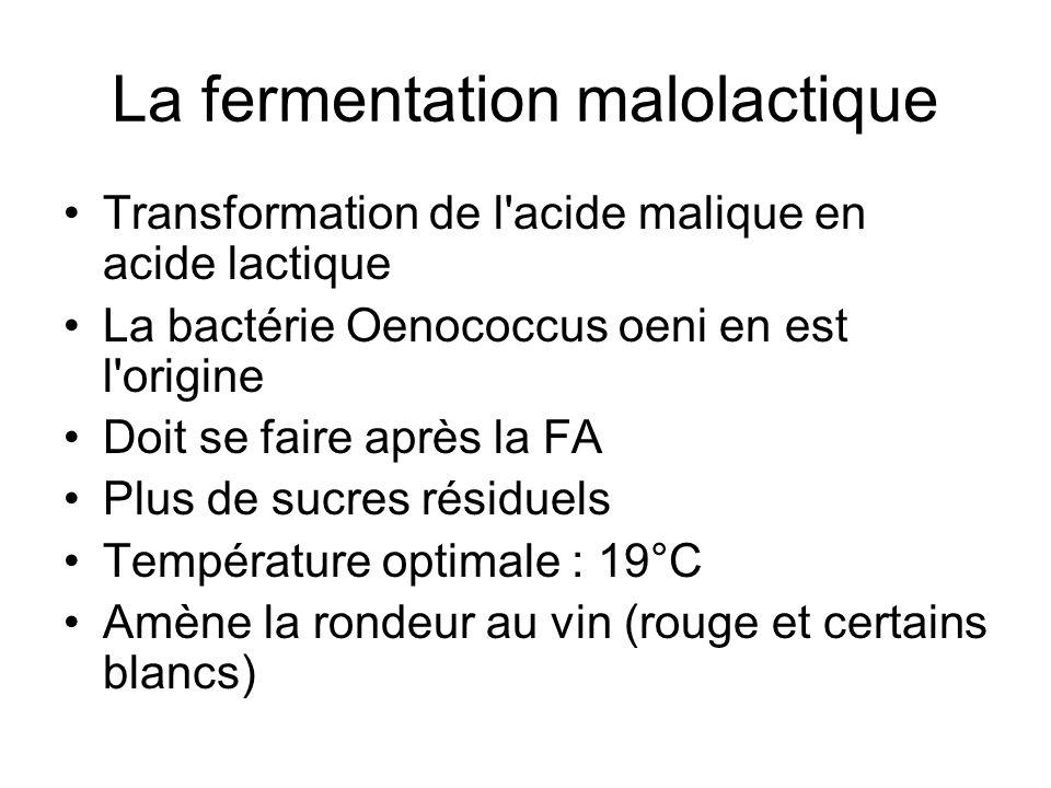 La fermentation malolactique Transformation de l'acide malique en acide lactique La bactérie Oenococcus oeni en est l'origine Doit se faire après la F