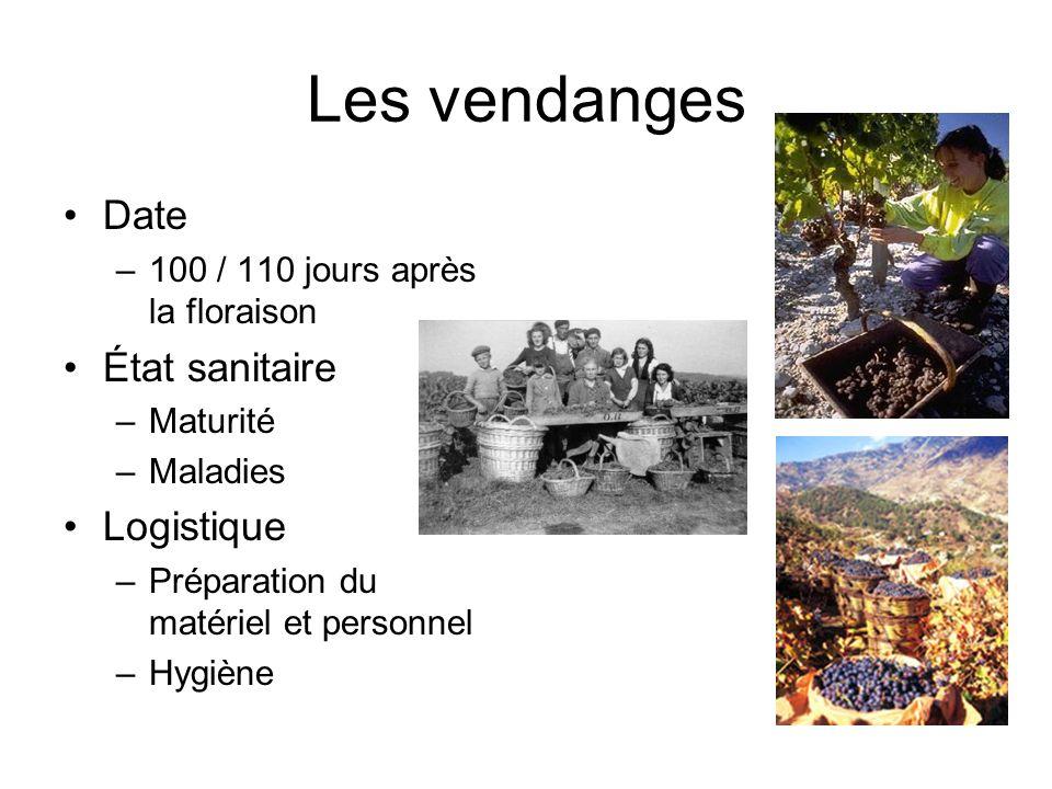 Les vendanges Date –100 / 110 jours après la floraison État sanitaire –Maturité –Maladies Logistique –Préparation du matériel et personnel –Hygiène