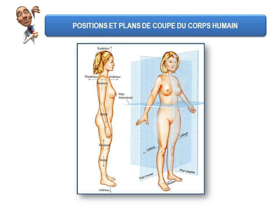 POSITIONS ET PLANS DE COUPE DU CORPS HUMAIN